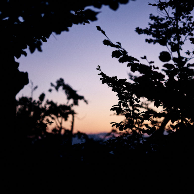 forêt-matin-couleurs