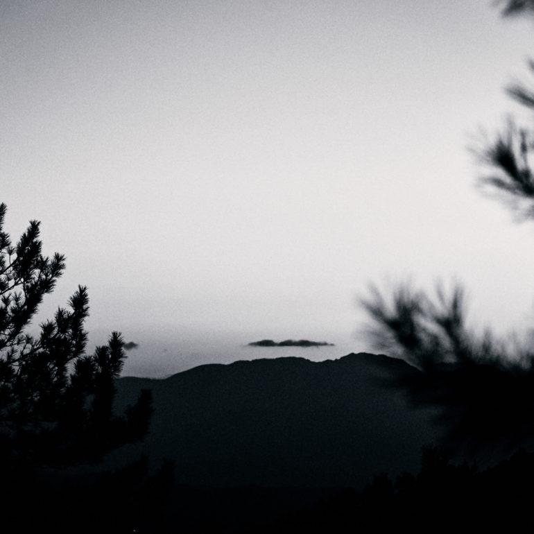 noir-blanc-pin-arbre